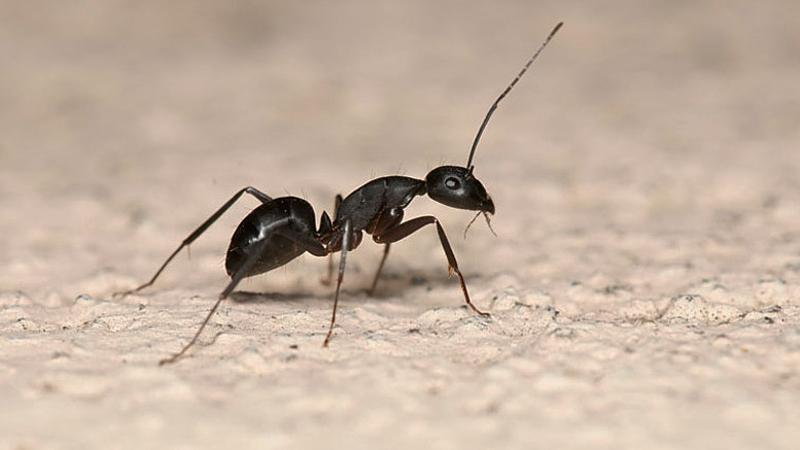 Mierenplaag bestrijden