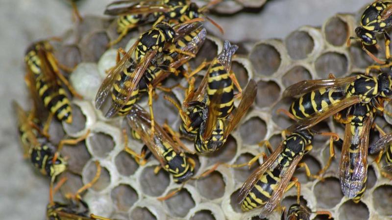 Vliegen en wespen bestrijding